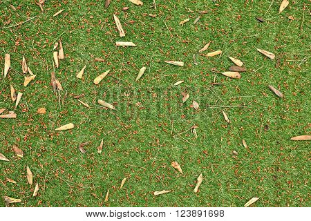 artificial grass with leaves and pine needles. Top view