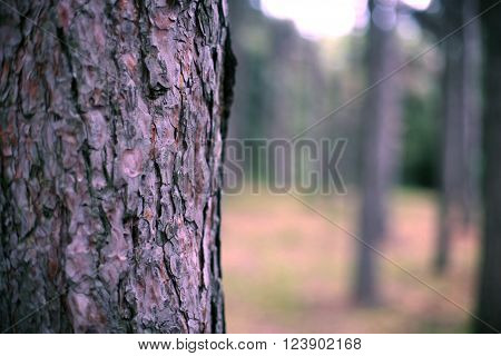 Wood Bark On Background Forest