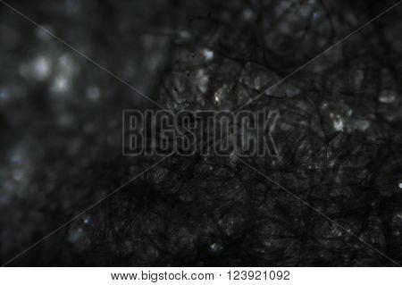 Tissue Paper Fibers Under The Microscope