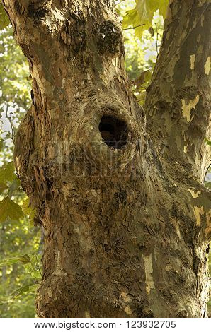 photo tree trunk detail with hole used by animal nest.