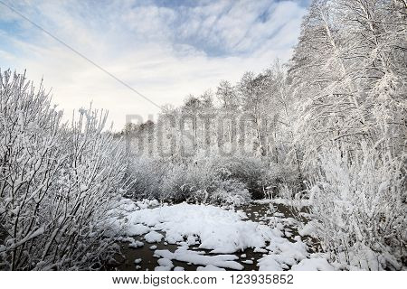 Snow-covered winter landscape. Forest bog in Latvia.