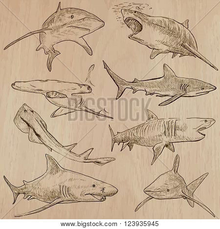Animals - SHARKS Chordata. Description - Hand drawn vectors freehand sketching. Editable in layers and groups. Colored background is isolated.