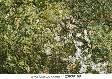 photo ancient masonry overgrown with moss. closeup