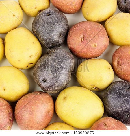 Full background of red, yellow and purple little potatoes