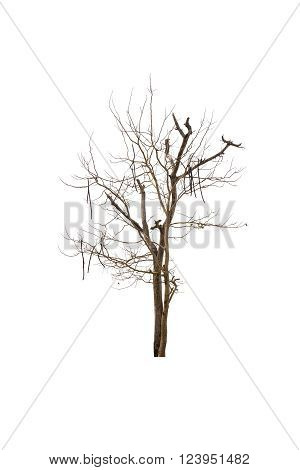 Tree and dead tree isolated on white background