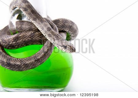 The Bottle Of Poison Twisted With A Snake-focused