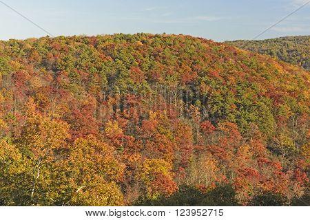 Hillside Erupting in Fall Colors in Shenandoah National Park in Virginia