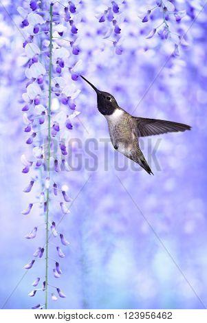 Delicate lavender petals of purple wisteria blooms vertical image