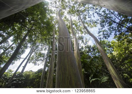 Wide angle view of trees in a tropical forest