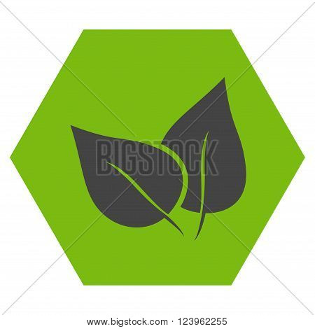 Flora Plant vector icon. Image style is bicolor flat flora plant icon symbol drawn on a hexagon with eco green and gray colors.