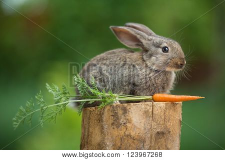 Portrait of cute baby rabbit bunny on stud with carrot against green bokeh background ** Note: Shallow depth of field