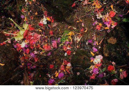 The scattered remains of Balinese-Hindu offerings of flower petals and incense sticks at a rural Hindu shrine in Sebatu Sacred Springs Bali Indonesia.