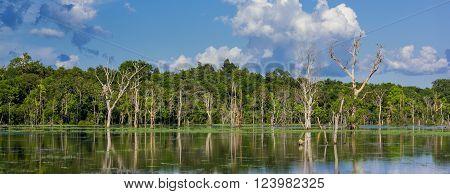 Panorama of Natural marshland vegetation at high tide.