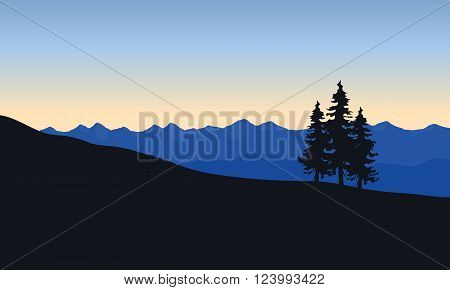 Silhouette of spruce in desert at the sunrise