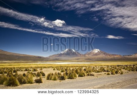 altiplano desert in bolivia near snow covered volcanos near  Sajama in altiplano desert