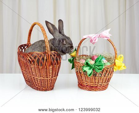 In the basket Gray rabbit sitting beside Easter basket