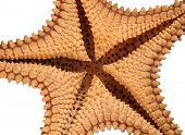 Under A Starfish
