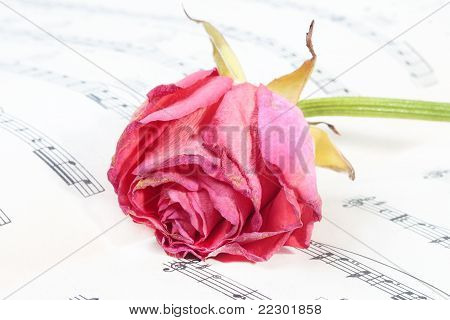 Wilted Rose Flower On The Music Paper (small Dof)