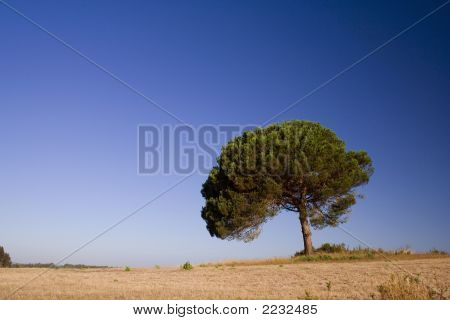 Lonely Tree On Blue