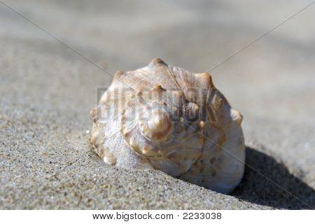 Sand Dune Shell