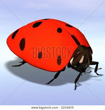 Ladybug #06
