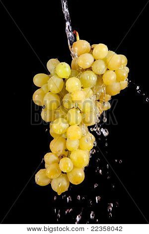Grape With Waterdrops Isolated On Black