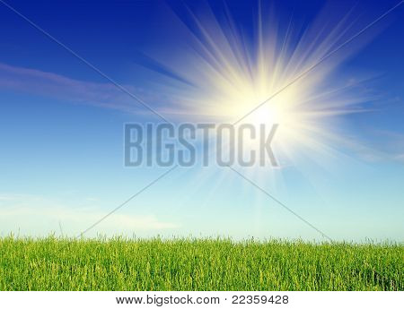 landscape with grass and sky