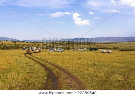 Minibuses at safari