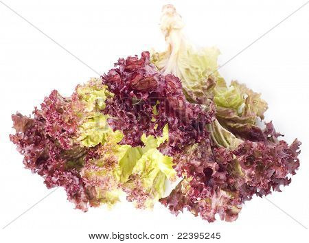 Red lettuce Leaves