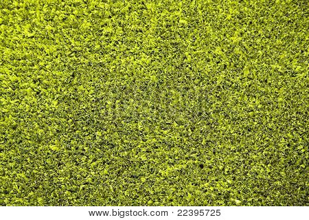 fragment of artificial grass for tennis courts