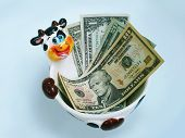 stock photo of cash cow  - A ceramic cow bowl holding USA dollars - JPG
