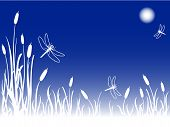 image of cattail  - Dragonflies in the sky on a foggy full moon night over a marsh with cattails and tall grass great nature background with copy space - JPG