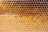 Close Up View Of The Working Bee On The Honeycomb With Sweet Honey.. poster