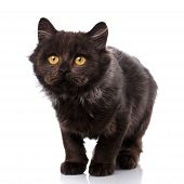 Black Cat. Cat From The Street. Friend. Pet. A True Friend. Kitten. Cute Kitty. Kitty Without Breed poster