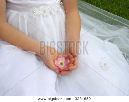 Flower Blossom In Hand