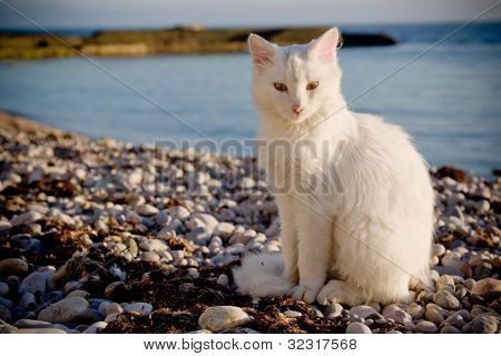 White cat on beach