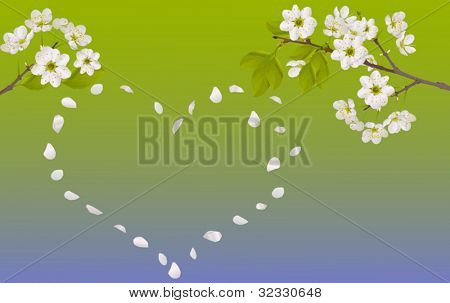 illustration with cherry tree flowers on green background