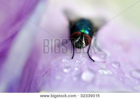 fly on petal