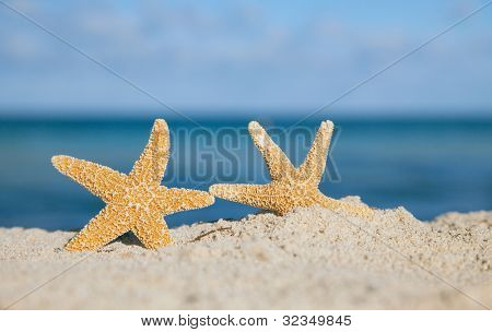 two sea star starfish on beach, blue sea and beach sand, shallow dof
