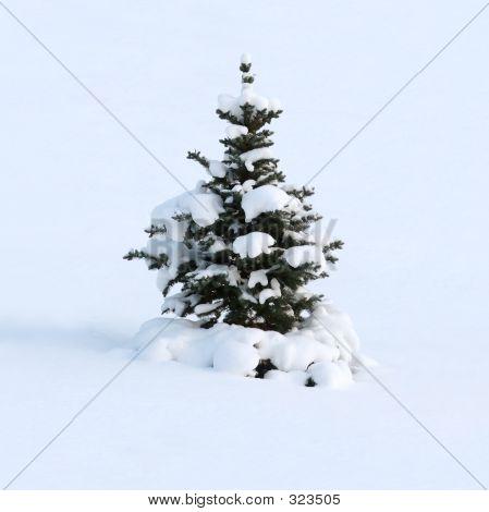 Winter Dream Of A Fur-tree