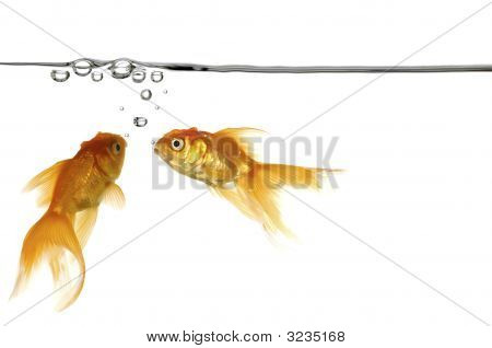 Waterline And Gold Fish