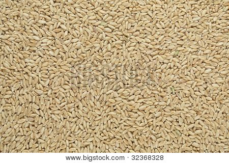 Whole Wheat Berry Full Background Evenly Lit Across Surface