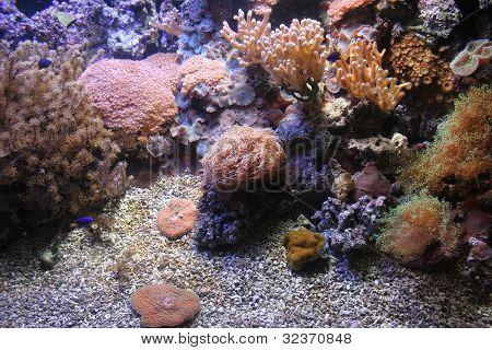 Mediterrainian marine life
