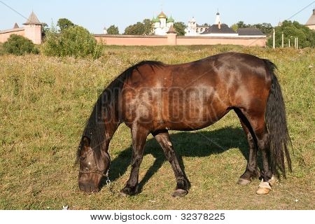 Horse in Suzdal Russia