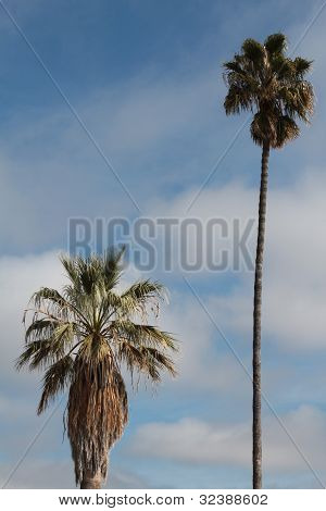 pair of palm trees with clouds