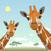 Two Cute Giraffes On A Landscape Background. Funny Background. Wildlife, Zoology, Safari. Flat Desig poster