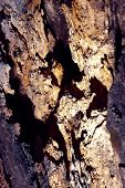 stock photo of hollow log  - Texture old wood hollow - JPG