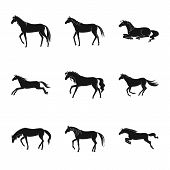 Vector Design Of Fauna And Mare Sign. Set Of Fauna And Stallion Vector Icon For Stock. poster
