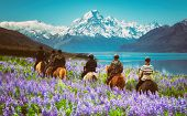 Travelers Ride Horses In Lupine Flower Field, Overlooking The Beautiful Landscape Of Mt Cook Nationa poster