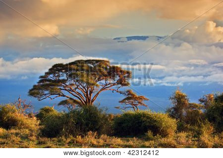 Mount Kilimanjaro partly in clouds at sunset, view from savanna landscape in Amboseli, Kenya, Africa